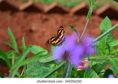 Butterfly on blurry flower