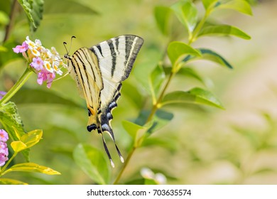 Butterfly on blurry green background 3
