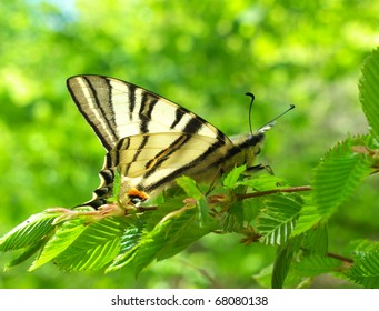 Butterfly on branch with green sheet. Natural composition