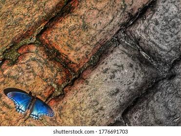 Butterfly on the brick in Salem North Carolina