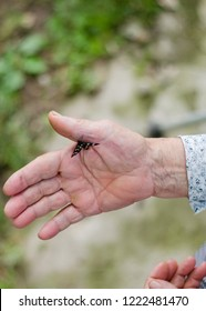 butterfly on elderly woman's hand. In motion concept isolated. Hands of grandmother holding black butterfly
