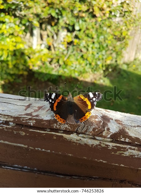 Butterfly on the fence