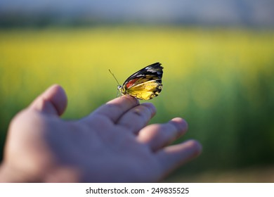 Butterfly on finger point  in  green field background