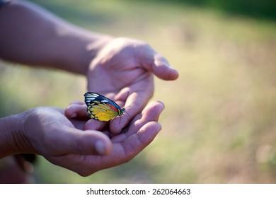 Butterfly on finger point in green field background