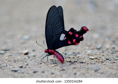 Butterfly on the floor.