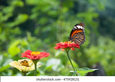 Butterfly on flower -Blur flower and sky background