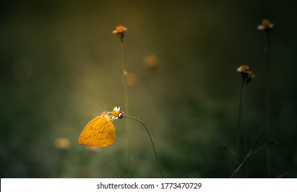 Butterfly on a flower with a blurry and dark background.
