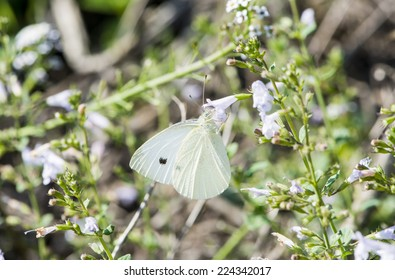 butterfly on a flower by feeding