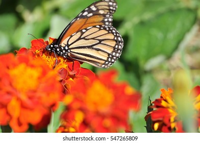 Butterfly on a flower. Copy space.