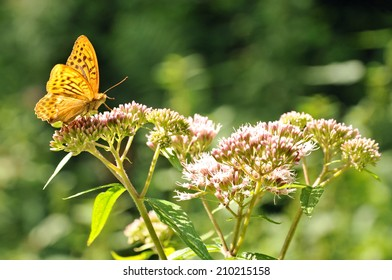 Butterfly on a flower in the forrest