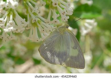 Butterfly on flower in garden, Thailand