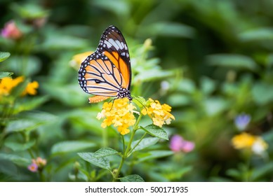 Butterfly On Flower With Grass Field
