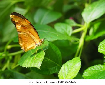 Butterfly on flower on green leaves, close-up legs, wings, tentacles