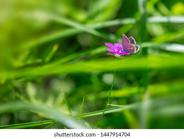 Butterfly on a flower on a green meadow, summer bright background, close up