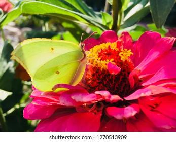 butterfly on a flower. petal