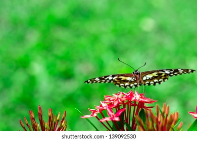 Butterfly on a flower spike.