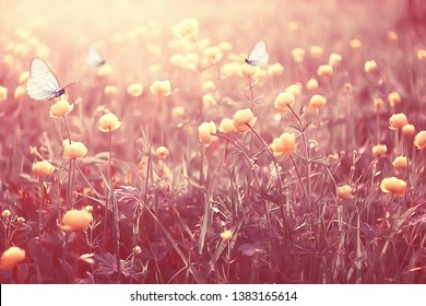 butterfly on a flower spring or summer background / nature flowers abstract summer warm toning
