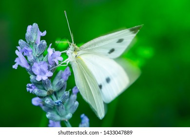 Butterfly on flower. Summer meadow with macro nature