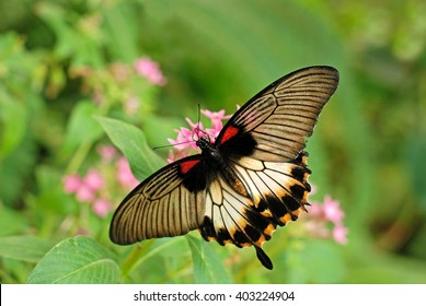 Butterfly on flower. Tropical garden.