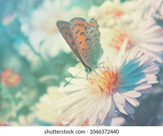 Butterfly on flowers in the garden. Soft focus.