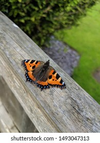 butterfly on a garden fence