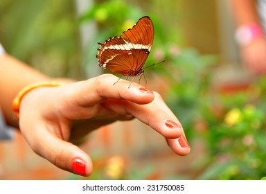 Butterfly on a girl hand