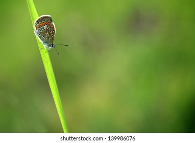 Butterfly on grass.