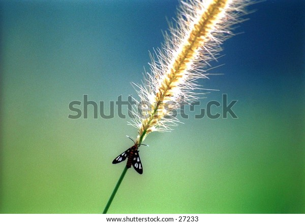 Butterfly on a grass