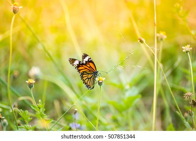 Butterfly On Grass Field With Warm Light