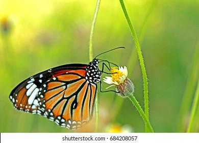Butterfly on grass flower