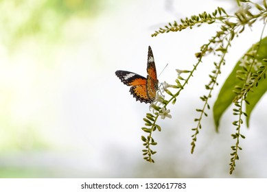 Butterfly on a green flower bouquet and copy space