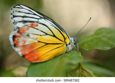 Butterfly on green leaf