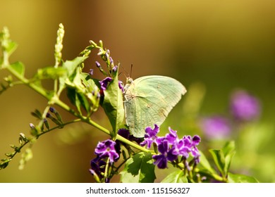 Butterfly on green nature.