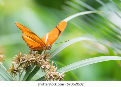 Butterfly on green plant