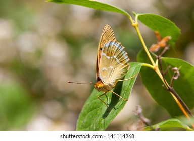 Butterfly on green sheet