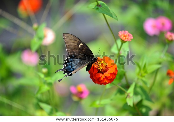 butterfly-on-group-wild-flowers-600w-151