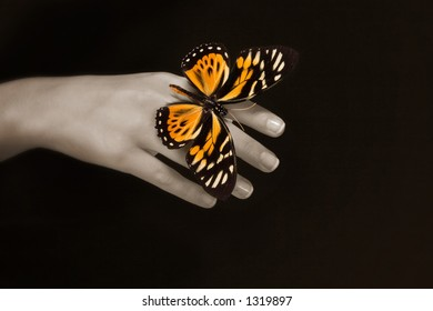 Butterfly on hand with black background
