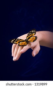 Butterfly on hand with blue background