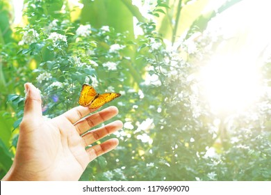 Butterfly on hand close up. Colorful butterflies in the forest with nuture and sunlight background.