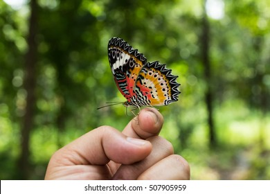 Real Butterfly Images Stock Photos Vectors Shutterstock