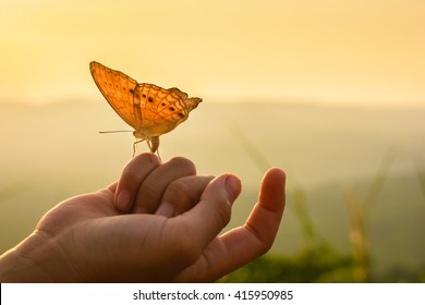 Butterfly on hand in jungle the beauty of nature