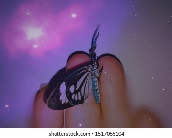 Butterfly on a hand sitting very beautiful can be a thumbnail design