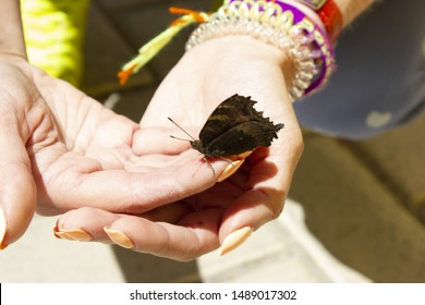 butterfly on the hands of a girl