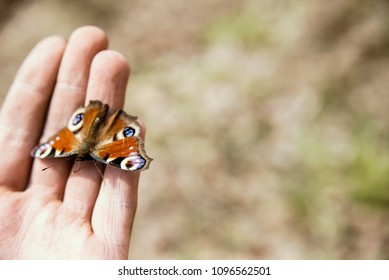 butterfly on human hand