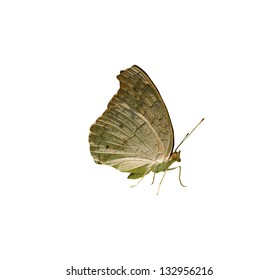 Butterfly on isolated white background