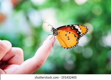 f533a5b11 Butterfly On Finger Images, Stock Photos & Vectors | Shutterstock