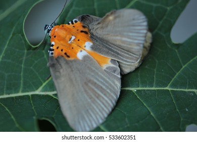 Butterfly on leaf.