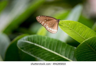 Butterfly on leaf India