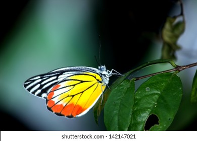 Butterfly on leaf in nature