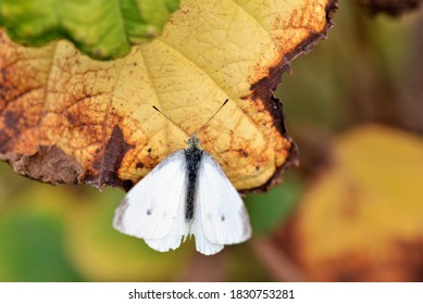 Butterfly on a leaf in nature